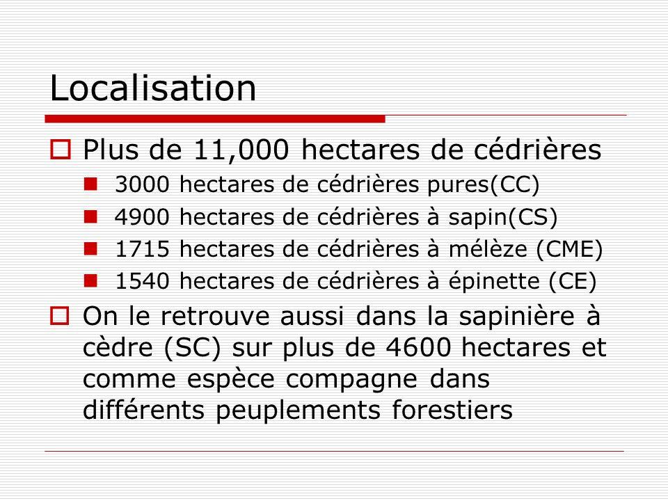 Localisation Plus de 11,000 hectares de cédrières 3000 hectares de cédrières pures(CC) 4900 hectares de cédrières à sapin(CS) 1715 hectares de cédrières à mélèze (CME) 1540 hectares de cédrières à épinette (CE) On le retrouve aussi dans la sapinière à cèdre (SC) sur plus de 4600 hectares et comme espèce compagne dans différents peuplements forestiers