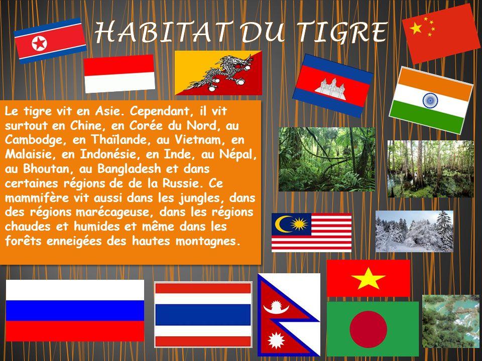 Le tigre vit en Asie.