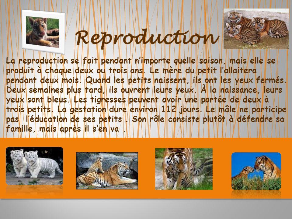 La reproduction se fait pendant nimporte quelle saison, mais elle se produit à chaque deux ou trois ans.