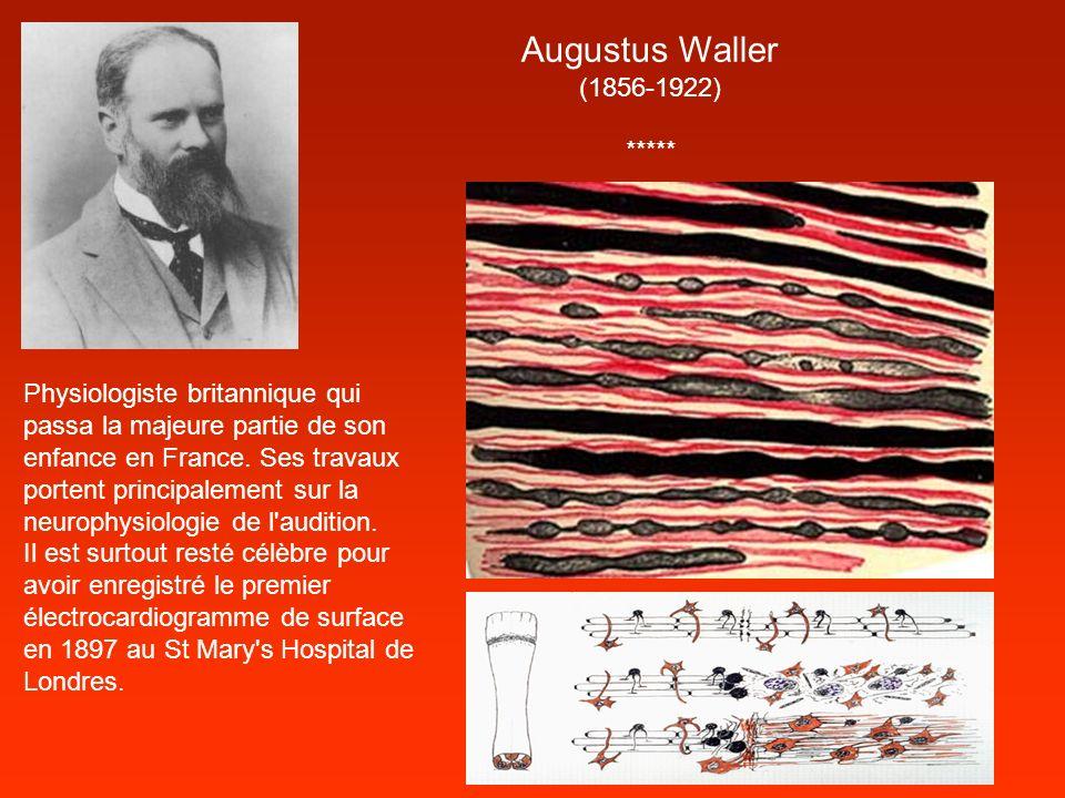 Augustus Waller (1856-1922) ***** Physiologiste britannique qui passa la majeure partie de son enfance en France. Ses travaux portent principalement s