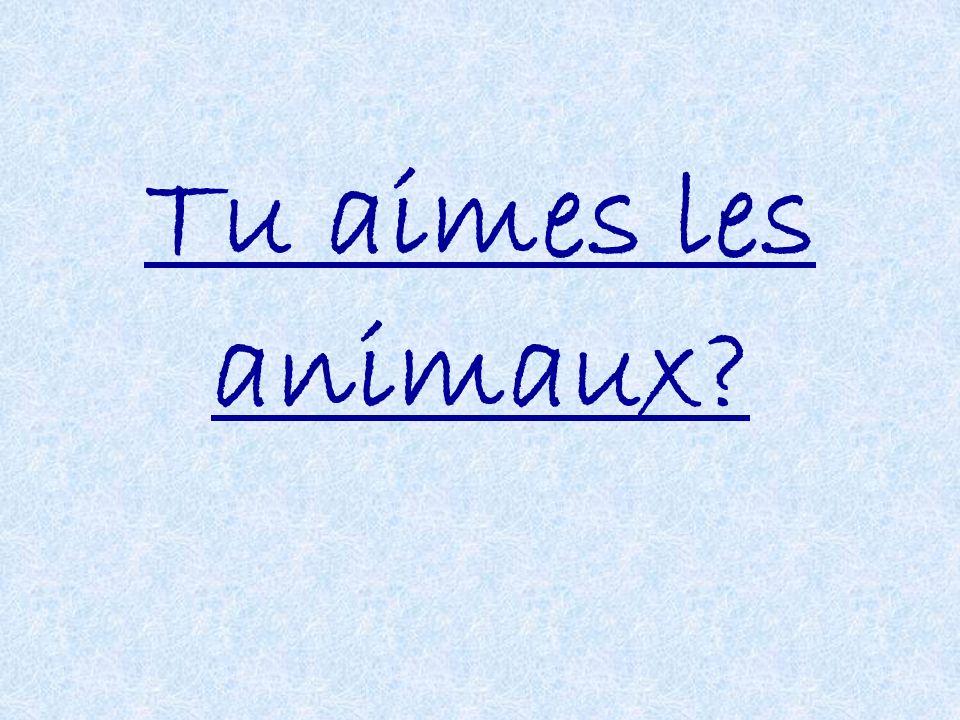Tu aimes les animaux?