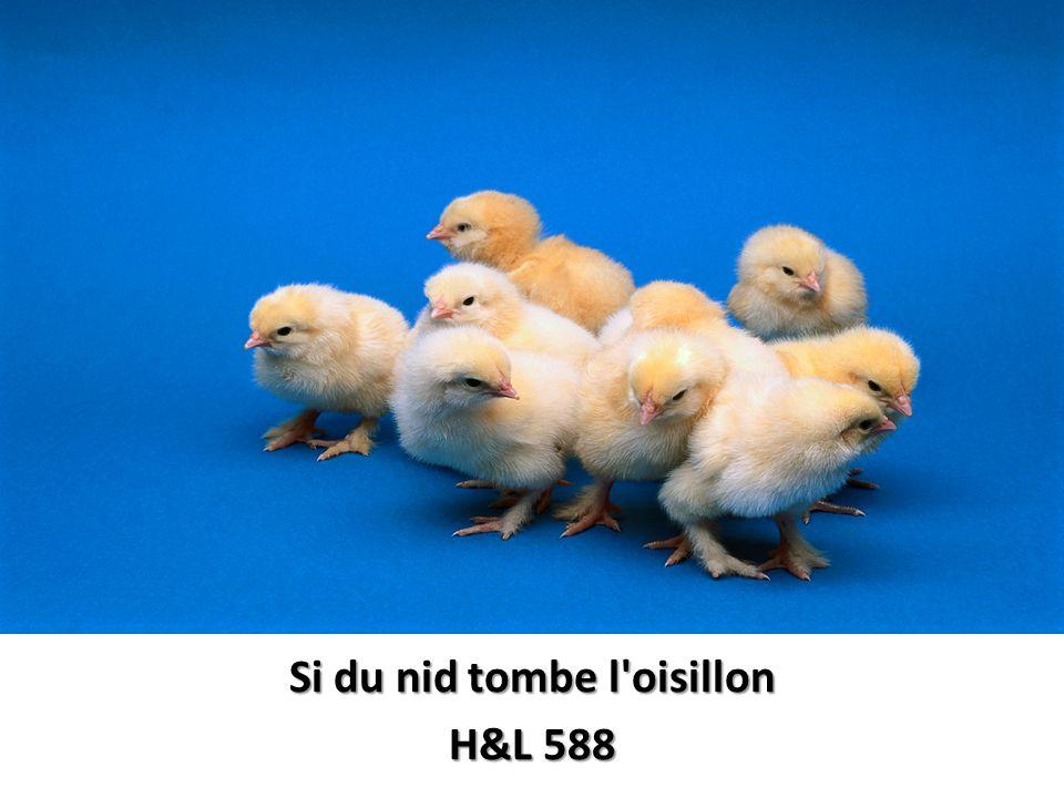 Si du nid tombe l oisillon H&L 588