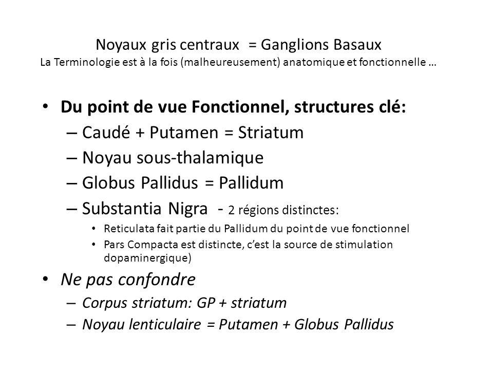 Noyaux gris centraux = Ganglions Basaux La Terminologie est à la fois (malheureusement) anatomique et fonctionnelle … Du point de vue Fonctionnel, str
