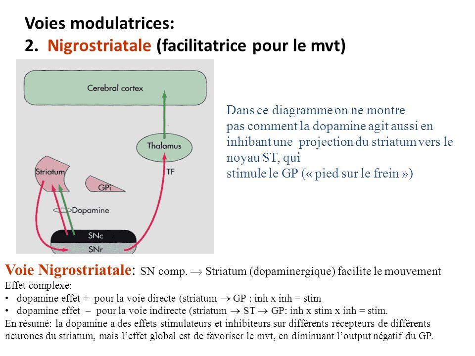 Voies modulatrices: 2. Nigrostriatale (facilitatrice pour le mvt) Voie Nigrostriatale: SN comp. Striatum (dopaminergique) facilite le mouvement Effet