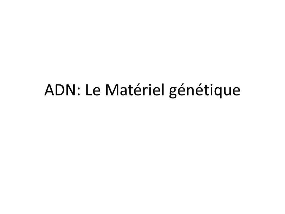 ADN: Le Matériel génétique
