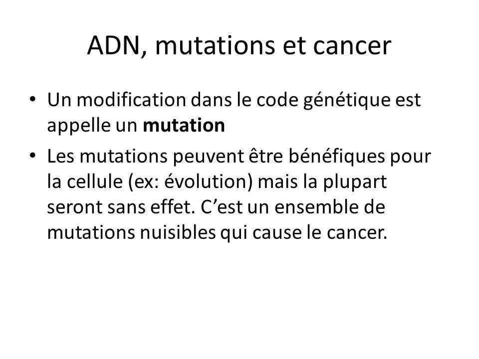 ADN, mutations et cancer Un modification dans le code génétique est appelle un mutation Les mutations peuvent être bénéfiques pour la cellule (ex: évo