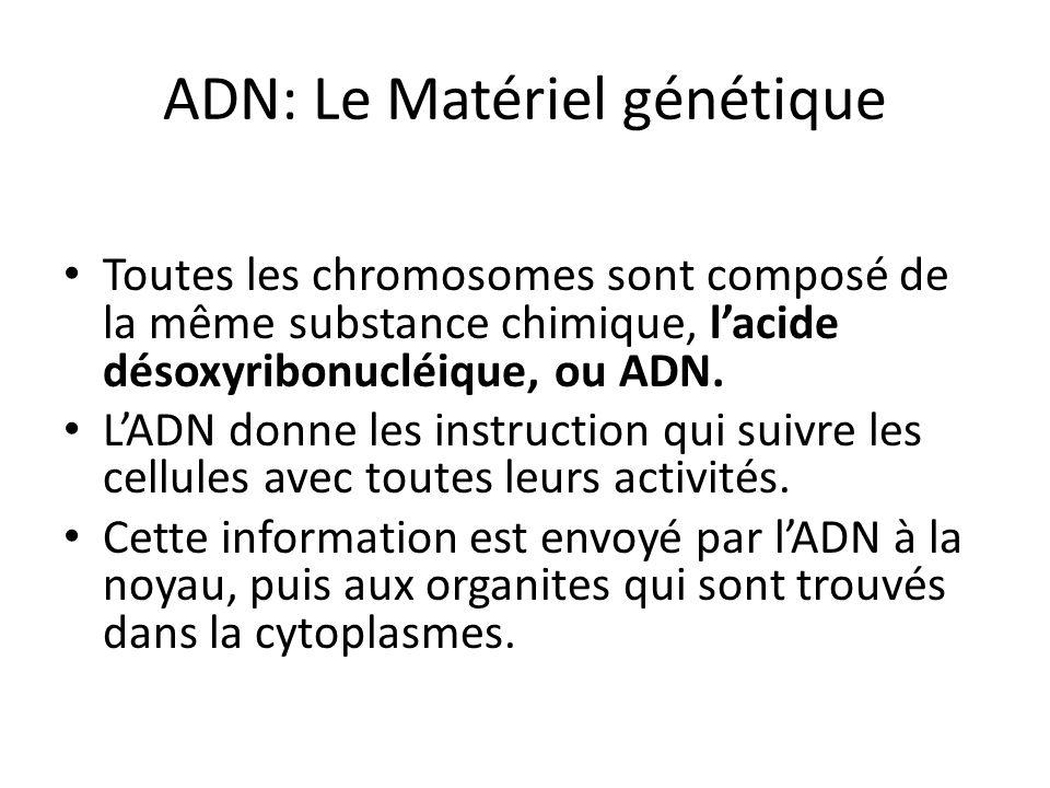 Toutes les chromosomes sont composé de la même substance chimique, lacide désoxyribonucléique, ou ADN. LADN donne les instruction qui suivre les cellu