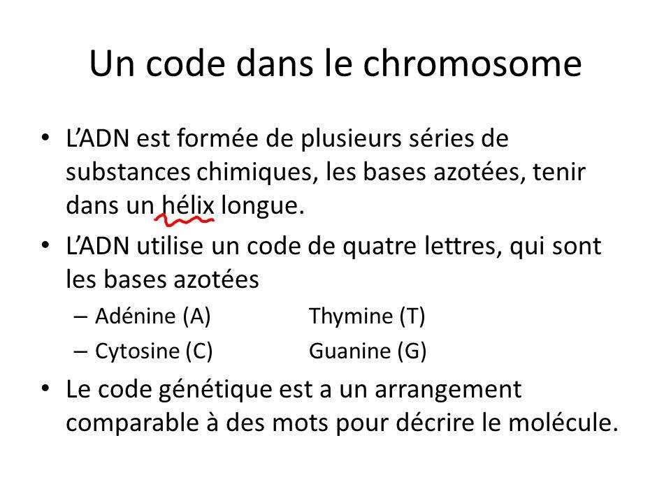 Un code dans le chromosome LADN est formée de plusieurs séries de substances chimiques, les bases azotées, tenir dans un hélix longue. LADN utilise un