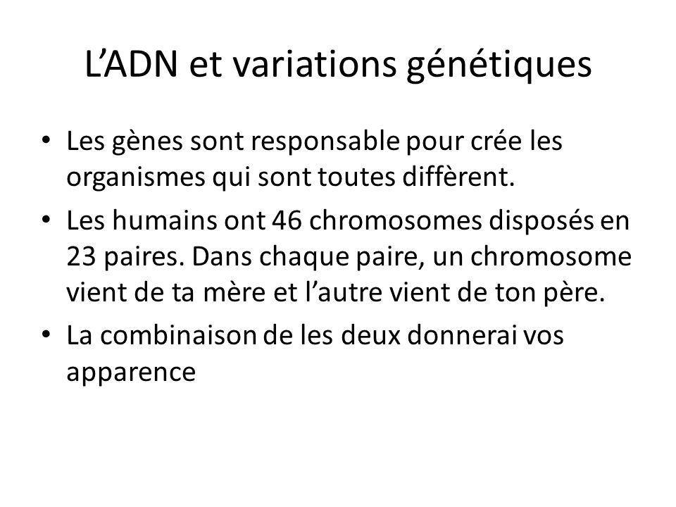LADN et variations génétiques Les gènes sont responsable pour crée les organismes qui sont toutes diffèrent. Les humains ont 46 chromosomes disposés e