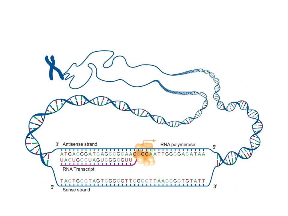 ADN, mutations et cancer Un modification dans le code génétique est appelle un mutation Les mutations peuvent être bénéfiques pour la cellule (ex: évolution) mais la plupart seront sans effet.