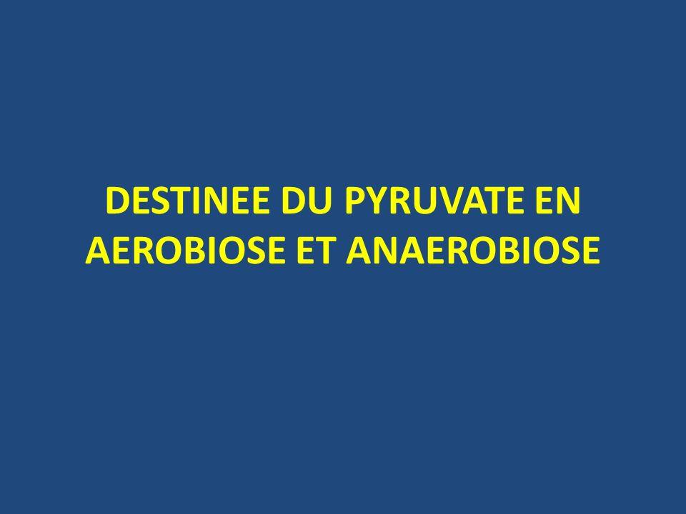 CATABOLISME AEROBIE a/ Régulation allostérique: -LADP, le NAD+ et le CoA: activent la pyruvate déshydrogénase (par déficit énergétique dans la cellule) -LATP, le NADH, H+ et lacétyl CoA: inhibent la pyruvate déshydrogénase (bonne réserve énergétique dans la cellule)