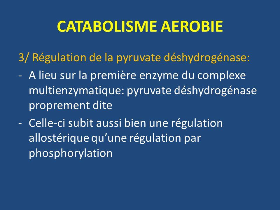 CATABOLISME AEROBIE 3/ Régulation de la pyruvate déshydrogénase: -A lieu sur la première enzyme du complexe multienzymatique: pyruvate déshydrogénase