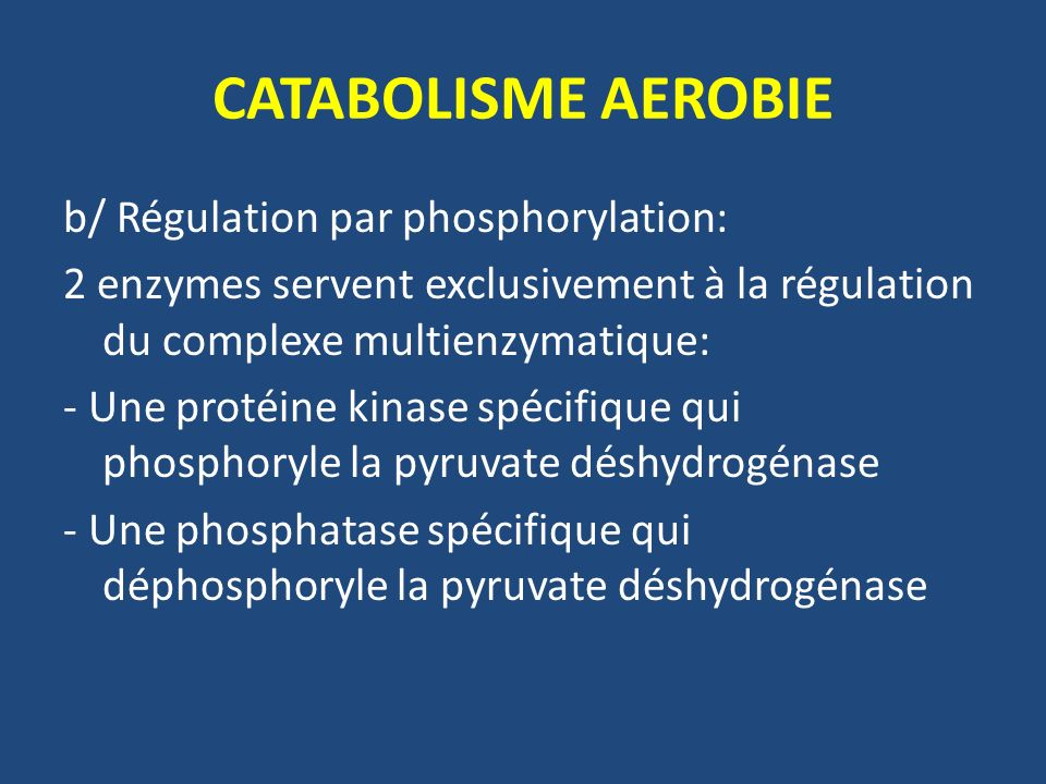 CATABOLISME AEROBIE b/ Régulation par phosphorylation: 2 enzymes servent exclusivement à la régulation du complexe multienzymatique: - Une protéine ki