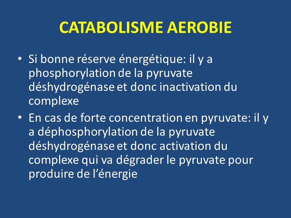 CATABOLISME AEROBIE Si bonne réserve énergétique: il y a phosphorylation de la pyruvate déshydrogénase et donc inactivation du complexe En cas de fort