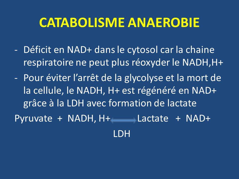 CATABOLISME ANAEROBIE -Déficit en NAD+ dans le cytosol car la chaine respiratoire ne peut plus réoxyder le NADH,H+ -Pour éviter larrêt de la glycolyse