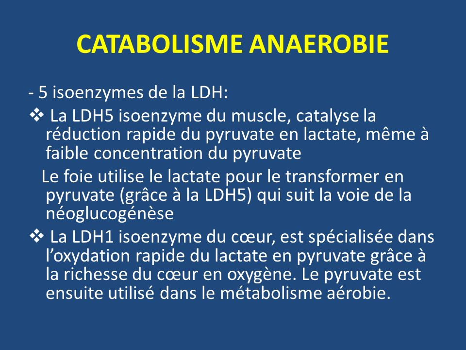 CATABOLISME ANAEROBIE - 5 isoenzymes de la LDH: La LDH5 isoenzyme du muscle, catalyse la réduction rapide du pyruvate en lactate, même à faible concen
