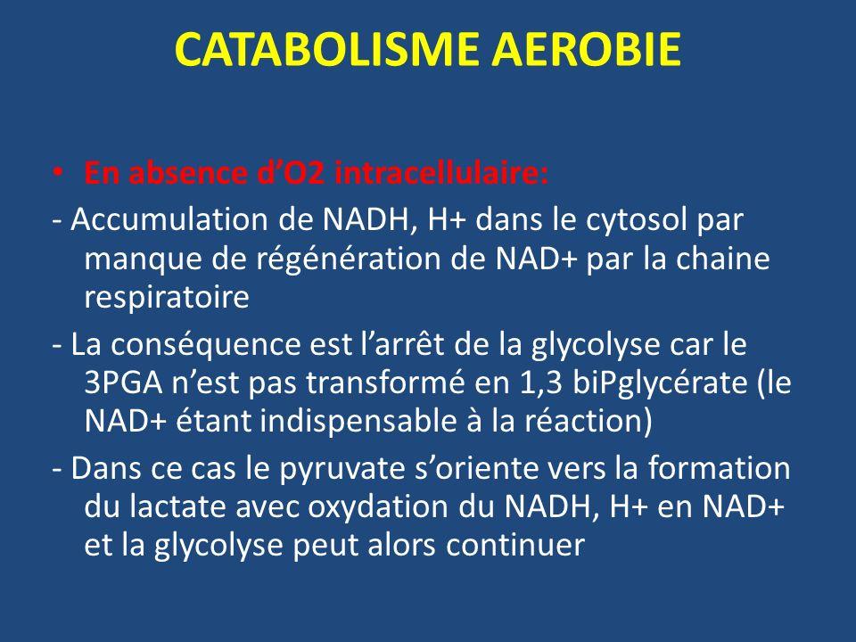 CATABOLISME AEROBIE En absence dO2 intracellulaire: - Accumulation de NADH, H+ dans le cytosol par manque de régénération de NAD+ par la chaine respir