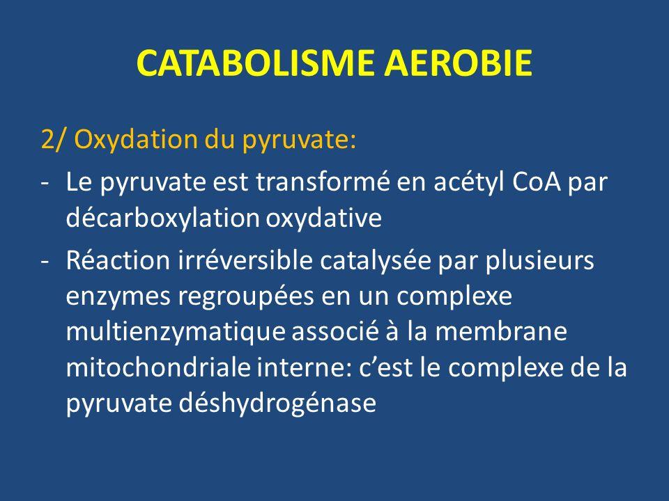 CATABOLISME AEROBIE - Ce complexe est composé de 3 enzymes et de 5 coenzymes: Pyruvate déshydrogénase Dihydrolipoyl acétyltransférase Dihydrolipoyl déshydrogénase TPP Acide lipoique Coenzyme A FADH NADH