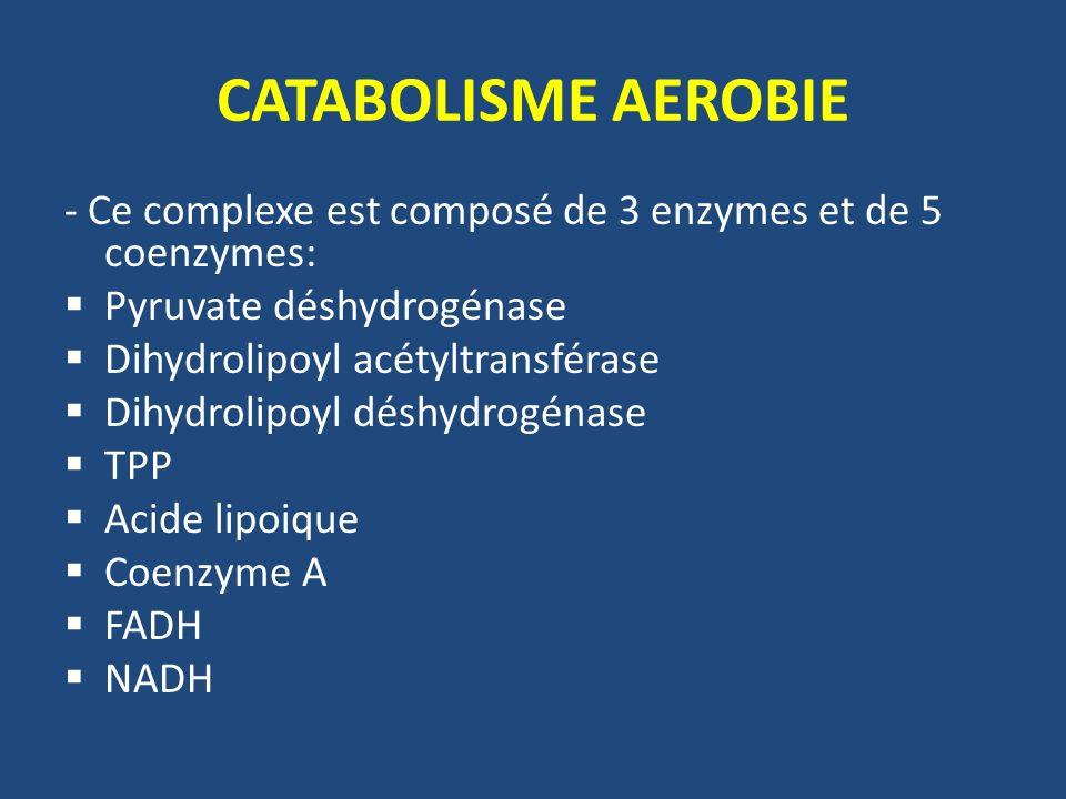 CATABOLISME AEROBIE - Ce complexe est composé de 3 enzymes et de 5 coenzymes: Pyruvate déshydrogénase Dihydrolipoyl acétyltransférase Dihydrolipoyl dé