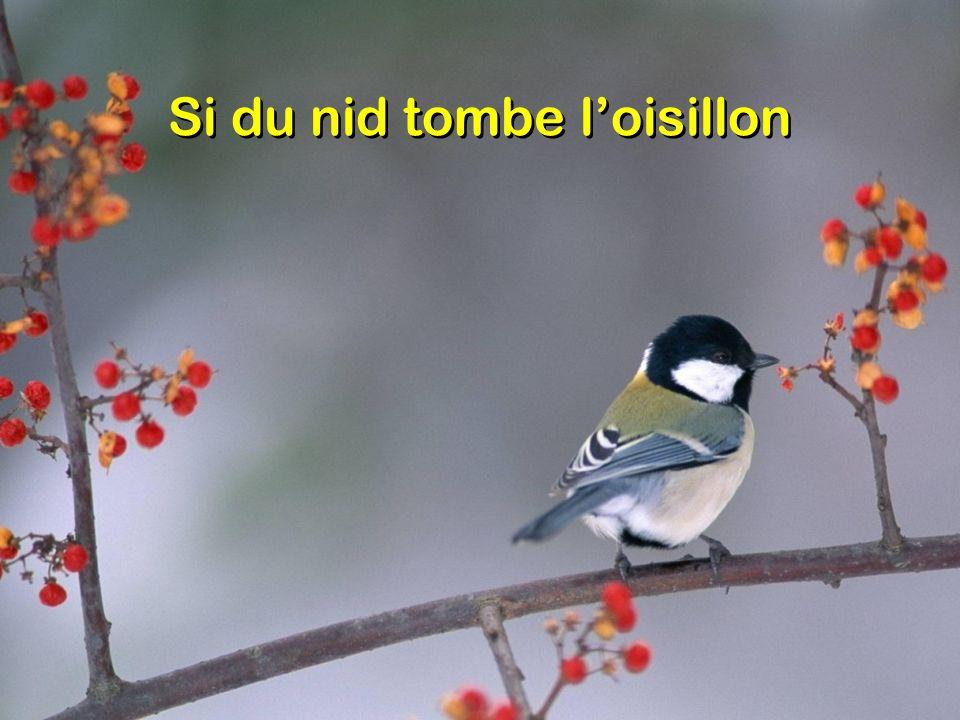 Si du nid tombe loisillon
