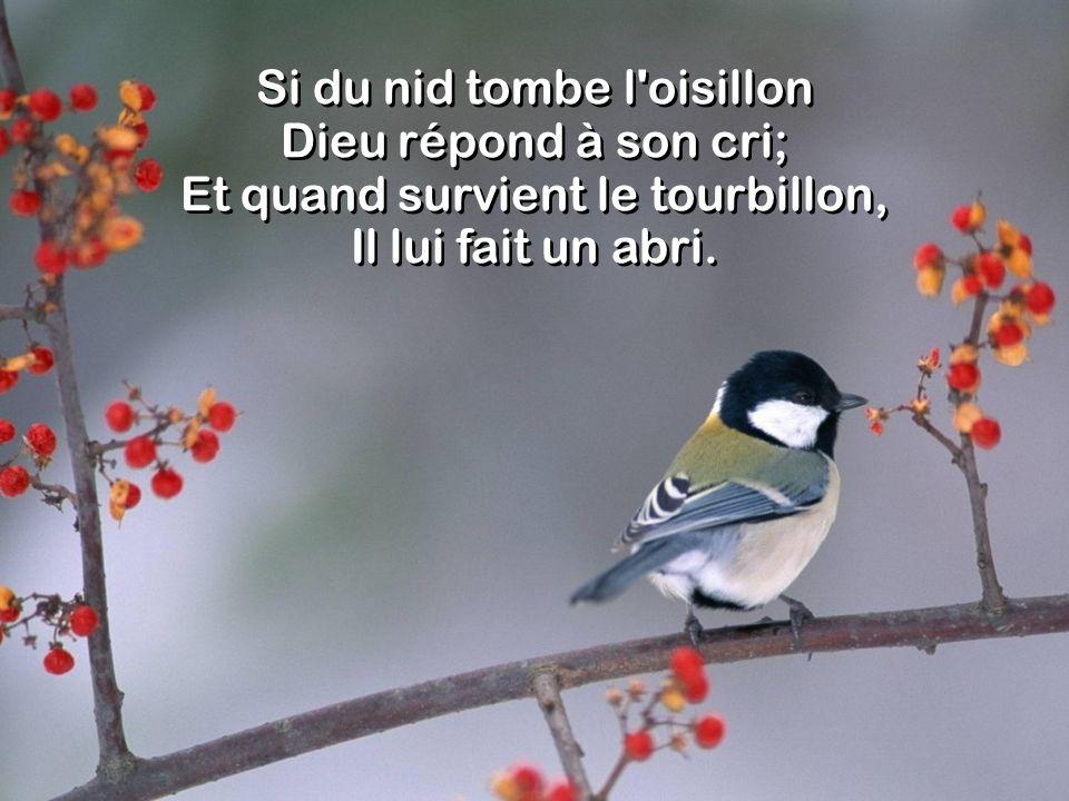 Si du nid tombe l'oisillon Dieu répond à son cri; Et quand survient le tourbillon, Il lui fait un abri.