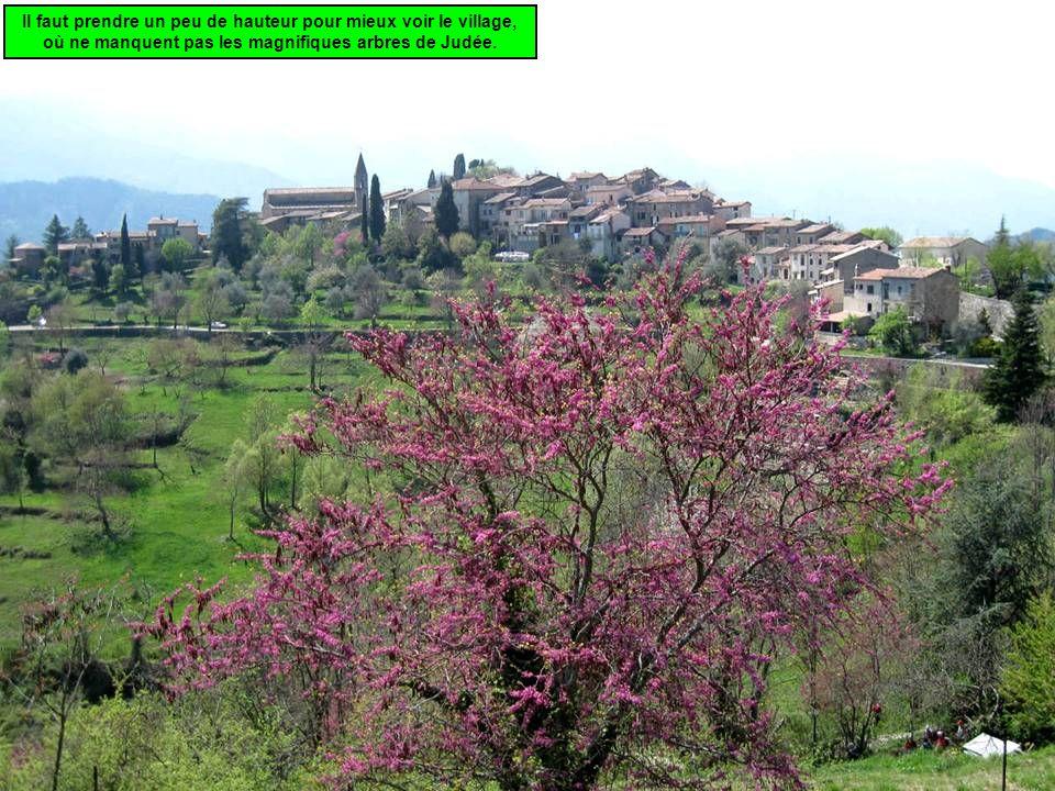 Il faut prendre un peu de hauteur pour mieux voir le village, où ne manquent pas les magnifiques arbres de Judée.