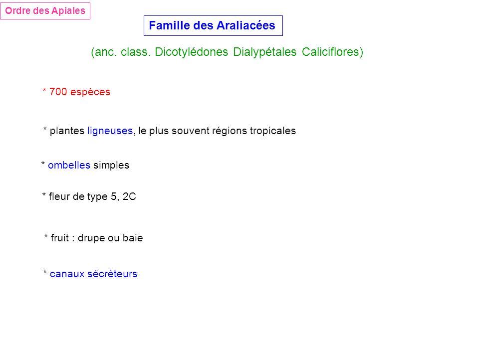 Famille des Araliacées Ordre des Apiales (anc. class. Dicotylédones Dialypétales Caliciflores) * 700 espèces * plantes ligneuses, le plus souvent régi