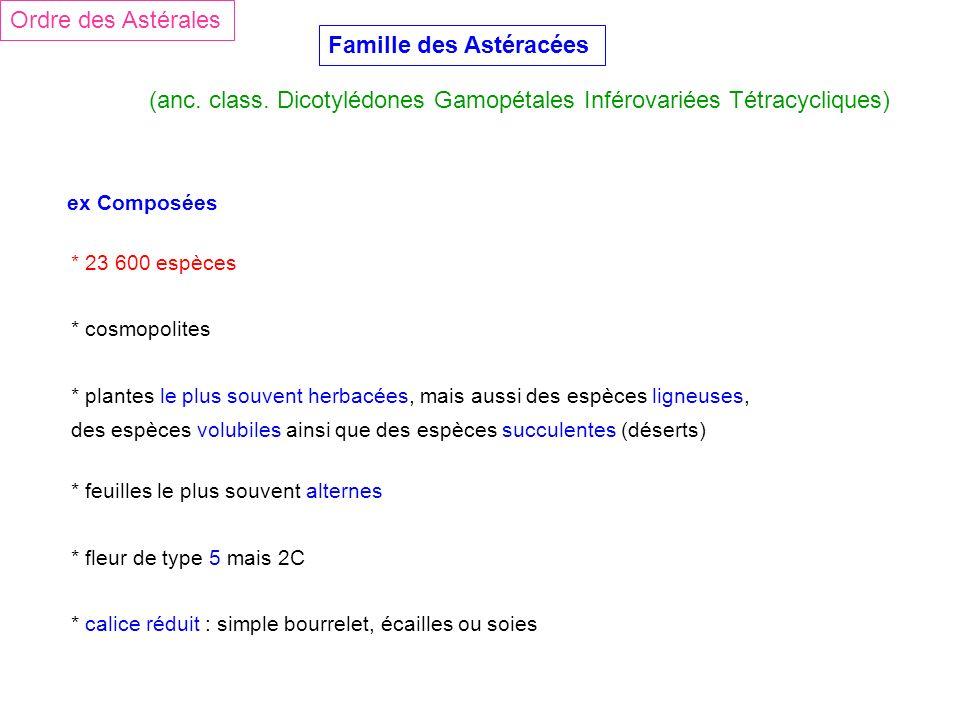 Ordre des Astérales Famille des Astéracées (anc. class. Dicotylédones Gamopétales Inférovariées Tétracycliques) ex Composées * 23 600 espèces * cosmop