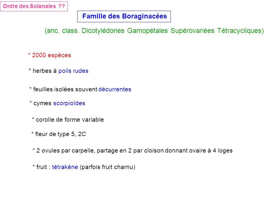 Famille des Boraginacées Ordre des Solanales ?? (anc. class. Dicotylédones Gamopétales Supérovariées Tétracycliques) * 2000 espèces * herbes à poils r