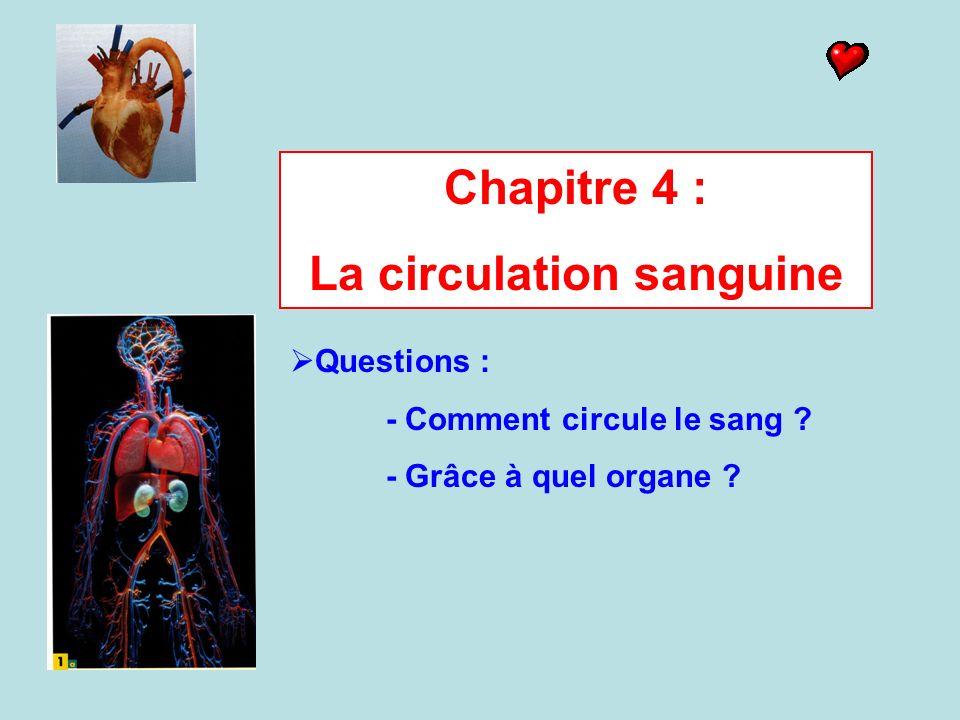 Chapitre 4 : La circulation sanguine Questions : - Comment circule le sang ? - Grâce à quel organe ?