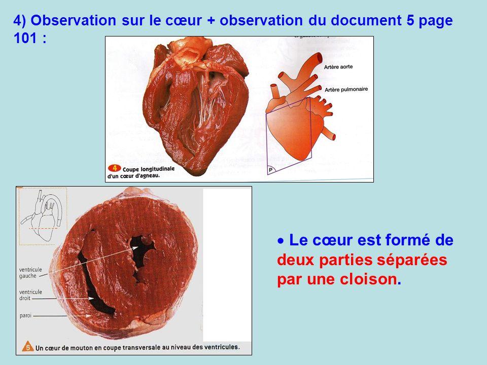 4) Observation sur le cœur + observation du document 5 page 101 : Le cœur est formé de deux parties séparées par une cloison.