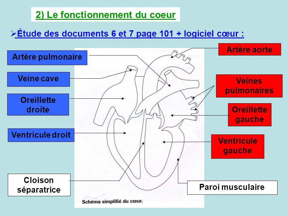 2) Le fonctionnement du coeur Étude des documents 6 et 7 page 101 + logiciel cœur : Artère pulmonaire Veine cave Oreillette droite Ventricule droit Cl