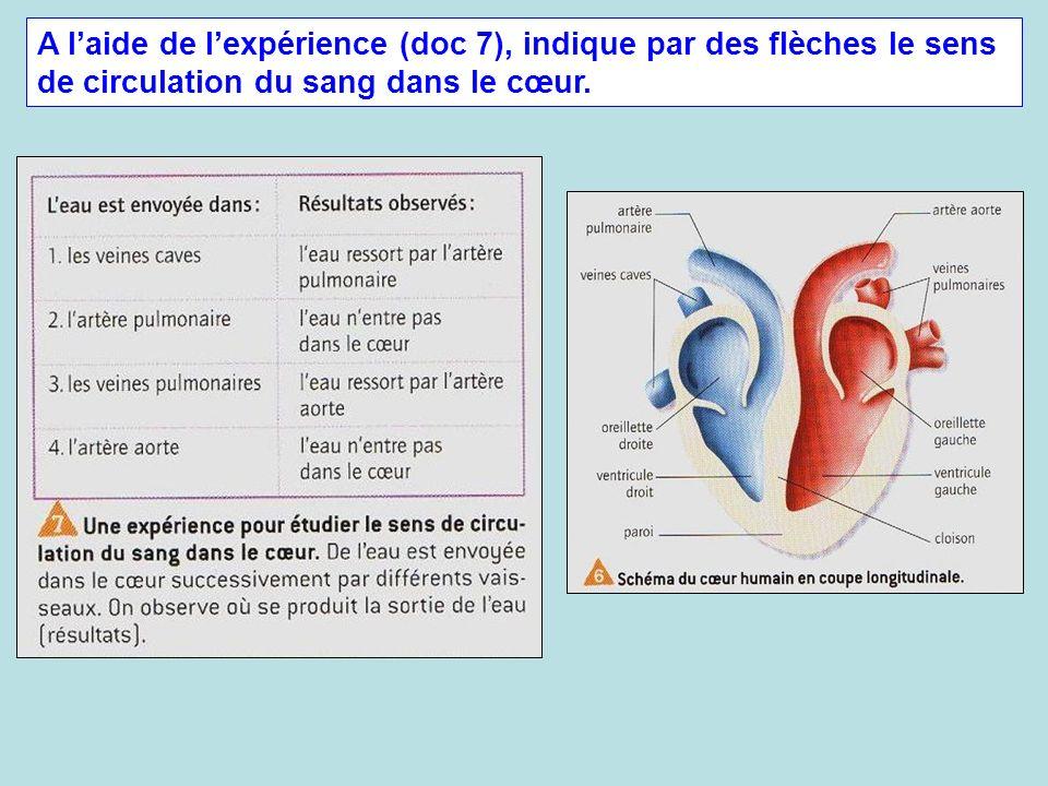 A laide de lexpérience (doc 7), indique par des flèches le sens de circulation du sang dans le cœur.