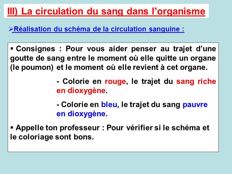 III) La circulation du sang dans lorganisme Réalisation du schéma de la circulation sanguine : Consignes : Pour vous aider penser au trajet dune goutt