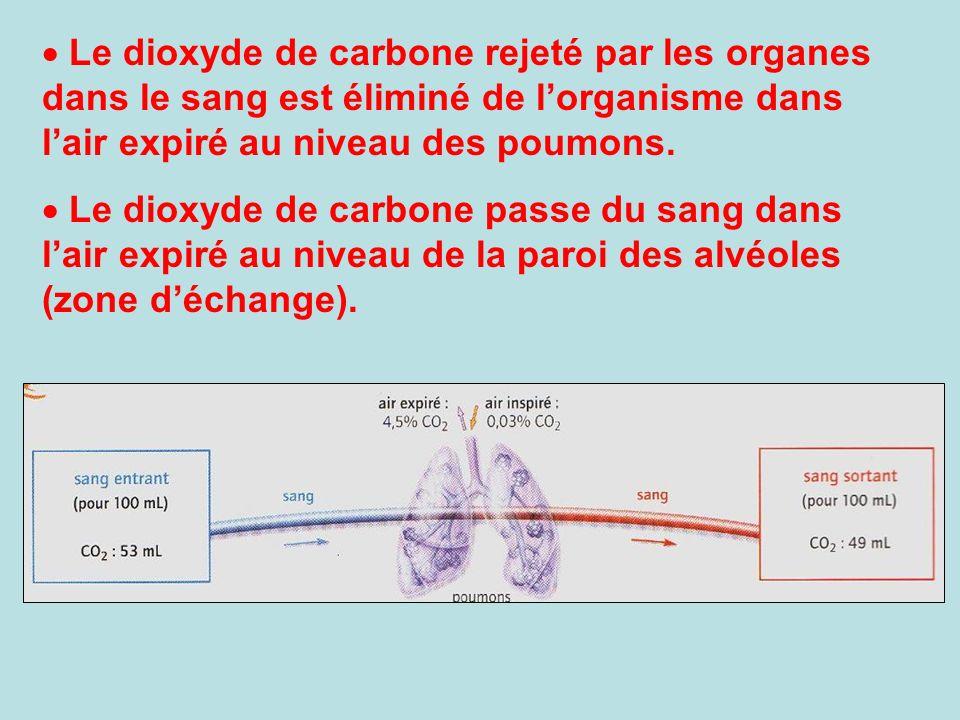 Le dioxyde de carbone rejeté par les organes dans le sang est éliminé de lorganisme dans lair expiré au niveau des poumons. Le dioxyde de carbone pass