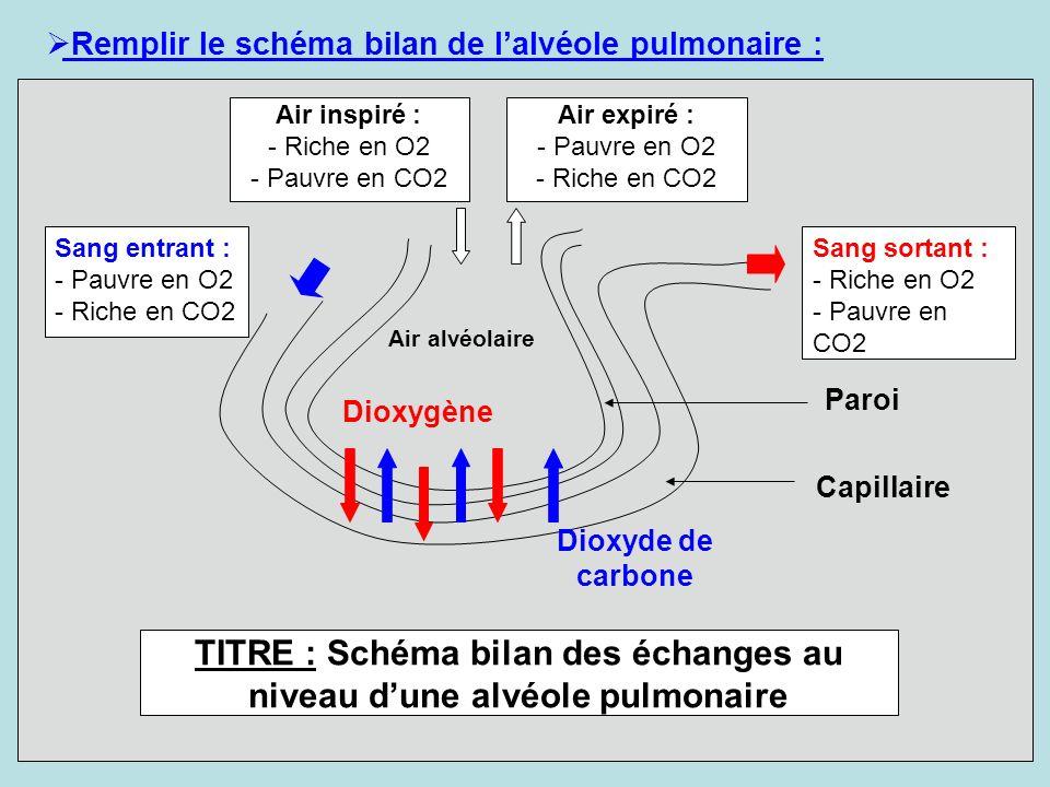 Remplir le schéma bilan de lalvéole pulmonaire : Air alvéolaire Paroi Capillaire Dioxygène Sang entrant : - Pauvre en O2 - Riche en CO2 Sang sortant :