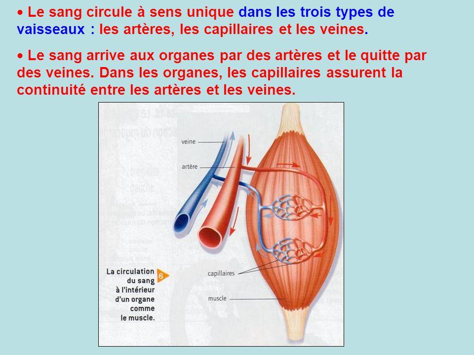 Le sang circule à sens unique dans les trois types de vaisseaux : les artères, les capillaires et les veines. Le sang arrive aux organes par des artèr
