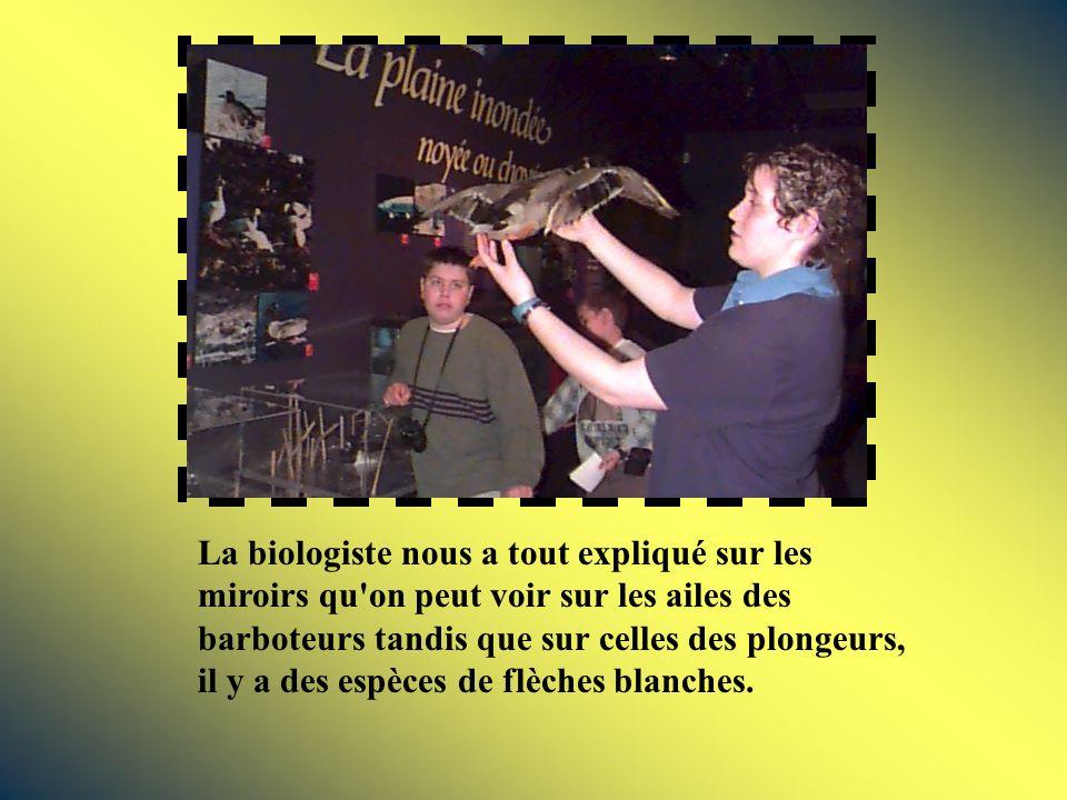 La biologiste nous a tout expliqué sur les miroirs qu on peut voir sur les ailes des barboteurs tandis que sur celles des plongeurs, il y a des espèces de flèches blanches.