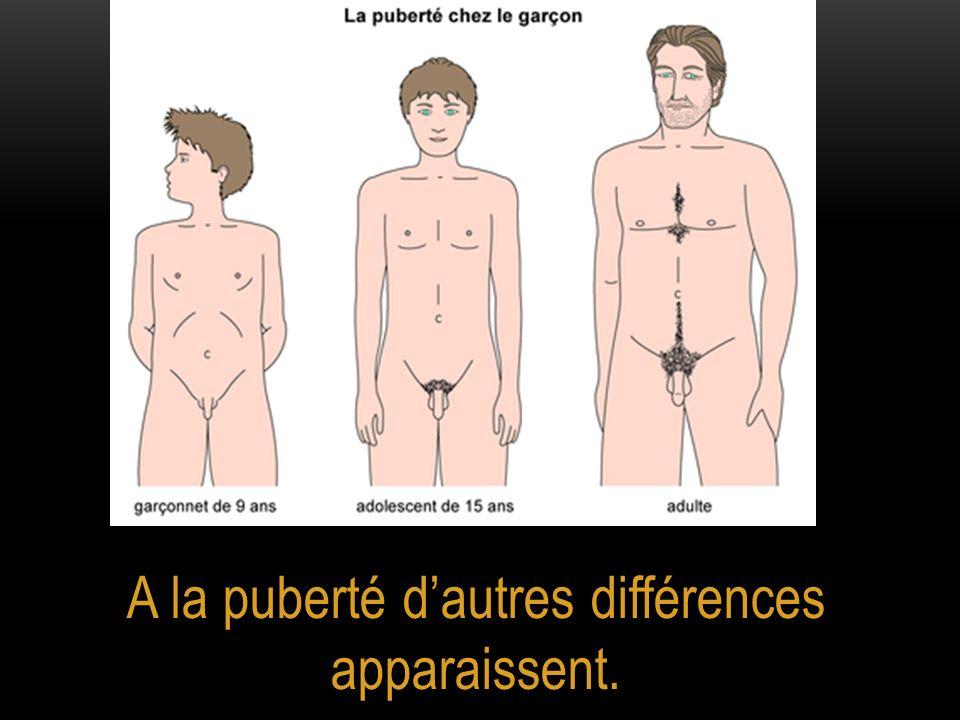 A la puberté dautres différences apparaissent.