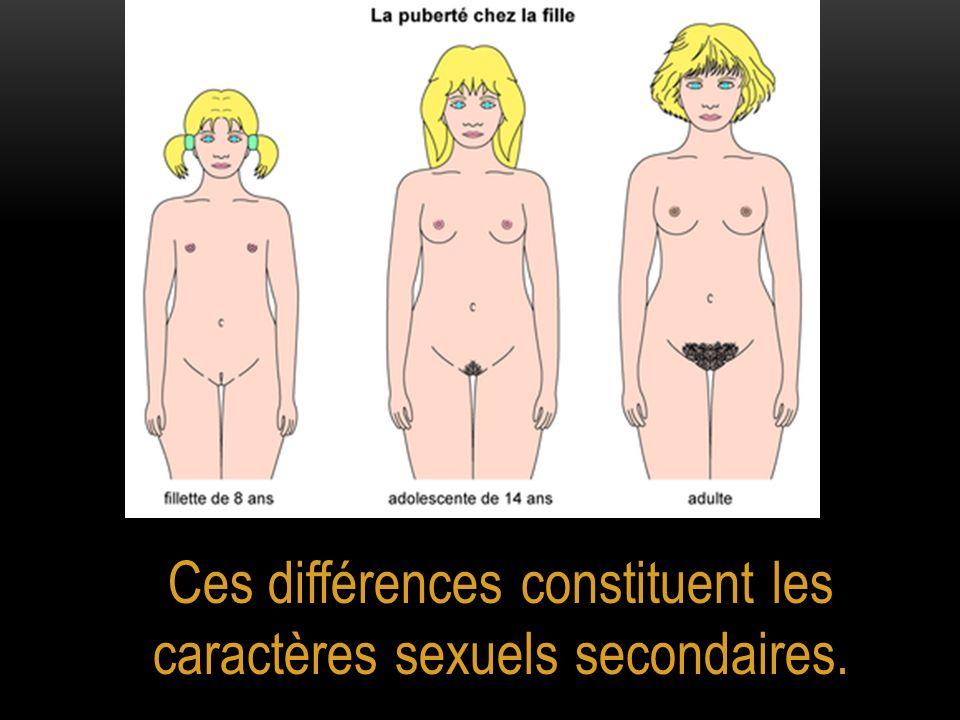 Ces différences constituent les caractères sexuels secondaires.