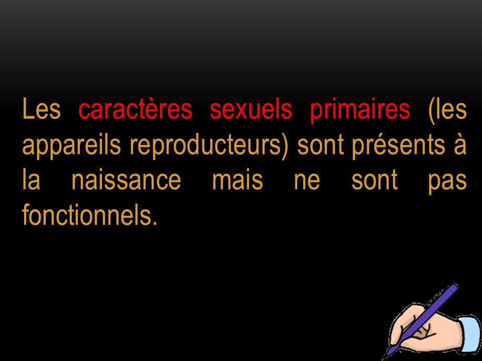 Les caractères sexuels primaires (les appareils reproducteurs) sont présents à la naissance mais ne sont pas fonctionnels.