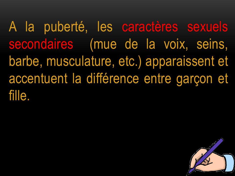 A la puberté, les caractères sexuels secondaires (mue de la voix, seins, barbe, musculature, etc.) apparaissent et accentuent la différence entre garç