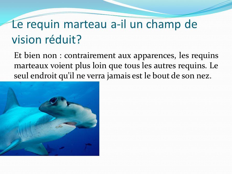 Le requin marteau a-il un champ de vision réduit? Et bien non : contrairement aux apparences, les requins marteaux voient plus loin que tous les autre