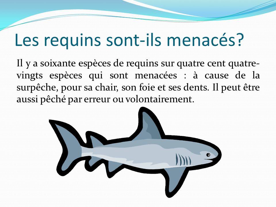 Les requins sont-ils menacés? Il y a soixante espèces de requins sur quatre cent quatre- vingts espèces qui sont menacées : à cause de la surpêche, po