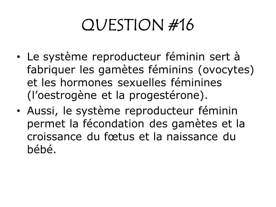 QUESTION #16 Le système reproducteur féminin sert à fabriquer les gamètes féminins (ovocytes) et les hormones sexuelles féminines (loestrogène et la p