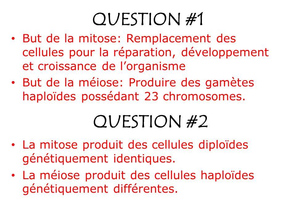 QUESTION #1 But de la mitose: Remplacement des cellules pour la réparation, développement et croissance de lorganisme But de la méiose: Produire des g