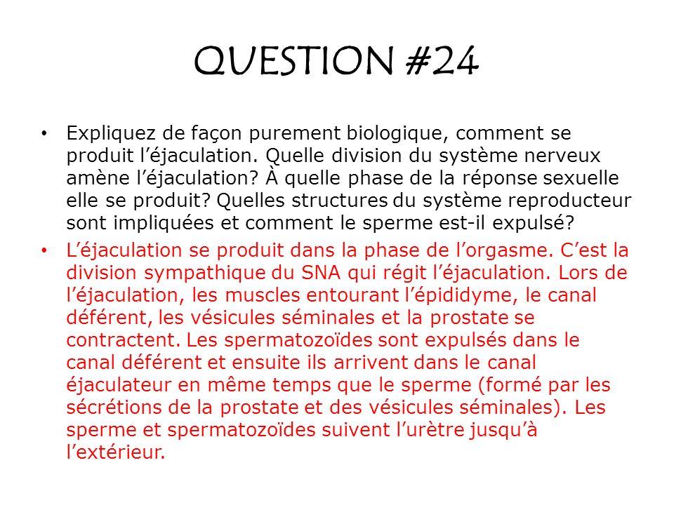 Expliquez de façon purement biologique, comment se produit léjaculation. Quelle division du système nerveux amène léjaculation? À quelle phase de la r