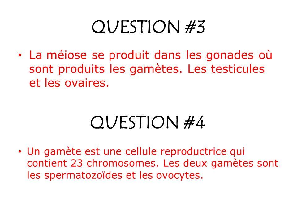 QUESTION #3 La méiose se produit dans les gonades où sont produits les gamètes. Les testicules et les ovaires. QUESTION #4 Un gamète est une cellule r
