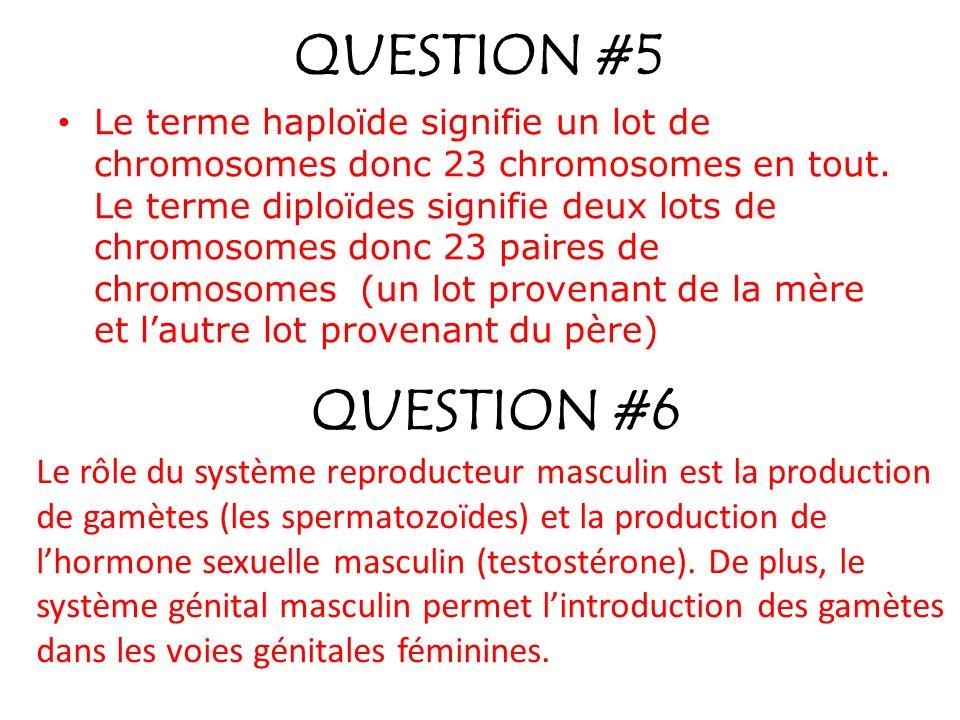 QUESTION #5 Le terme haploïde signifie un lot de chromosomes donc 23 chromosomes en tout. Le terme diploïdes signifie deux lots de chromosomes donc 23