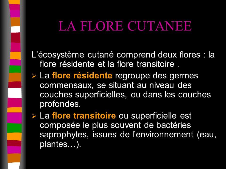 LA FLORE CUTANEE Lécosystème cutané comprend deux flores : la flore résidente et la flore transitoire.